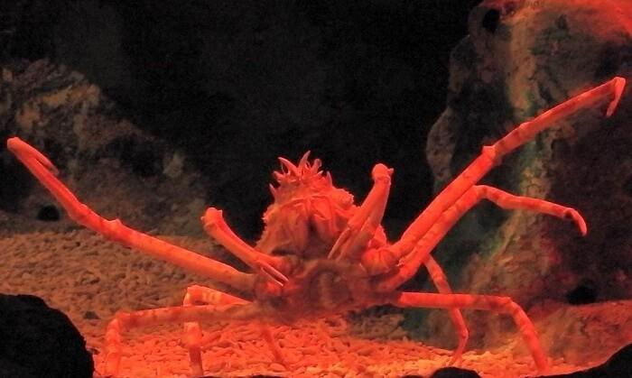 underwater world creatures