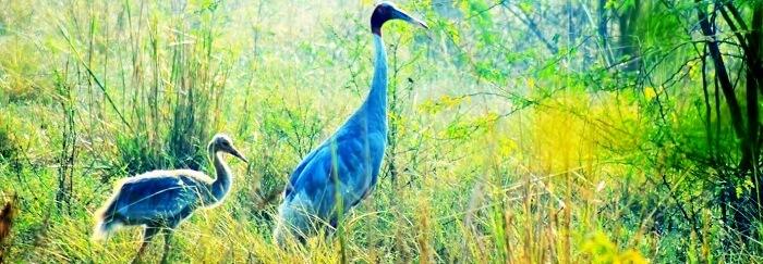 bird sanctuary in goa india