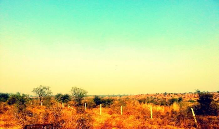 ghost story of Aravalli biodiversity park gurgaon