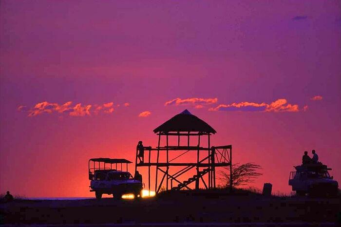 tips for jungle safari: Book A Dawn Or Dusk Safari