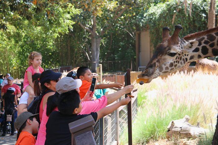tips for jungle safari: DON'Ts Of Jungle Safari