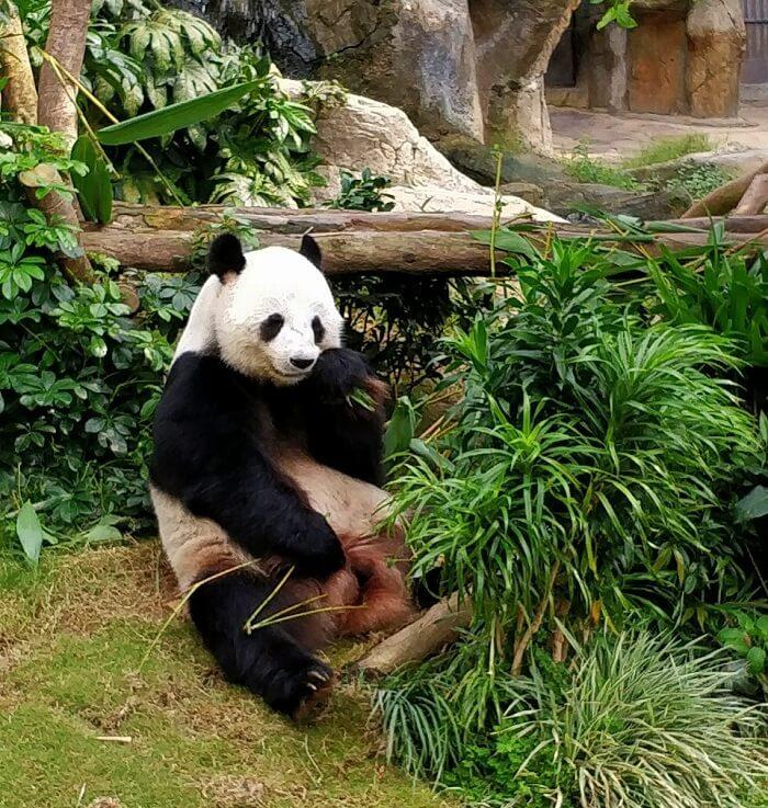 isha aggarwal hong kong family trip: seeing panda in ocean park