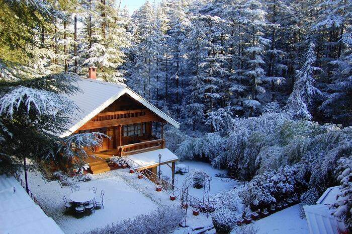 Snowfall in naldehra shimla