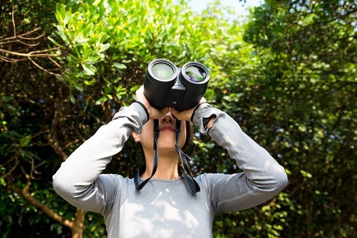 tips for Wildlife Spotting