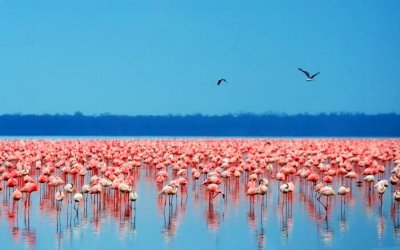 Hotel In Bahamas Is Hiring CFOs To Look After Flamingos