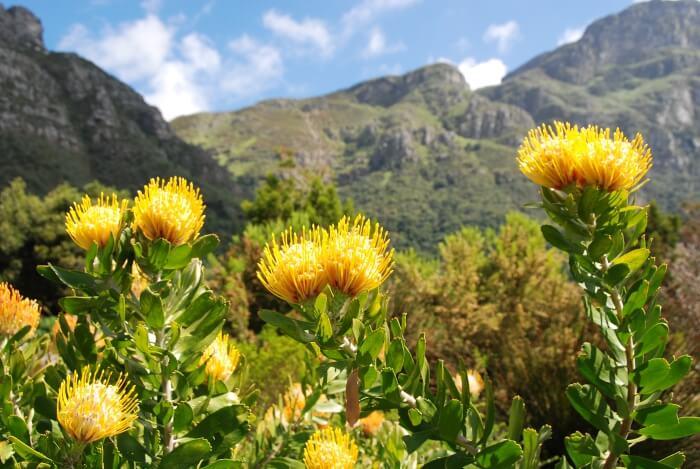 Kirstenbosch in South Africa