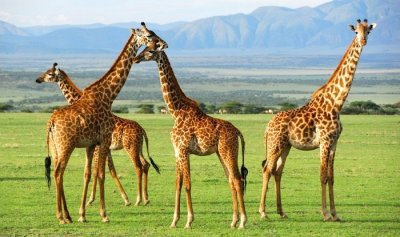 Places To Visit In Tanzania