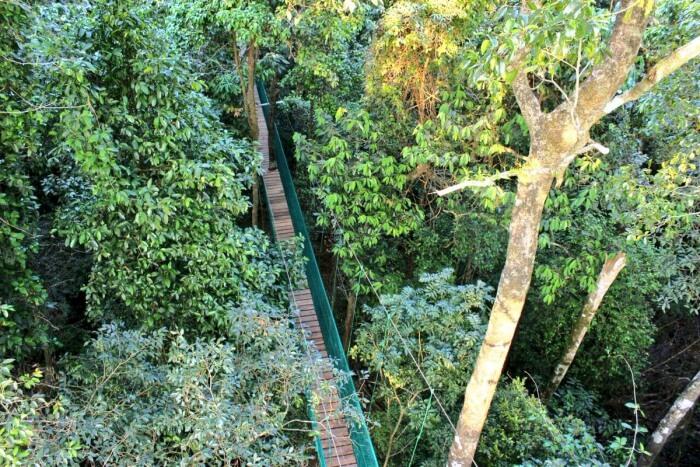canopy walk in karnataka