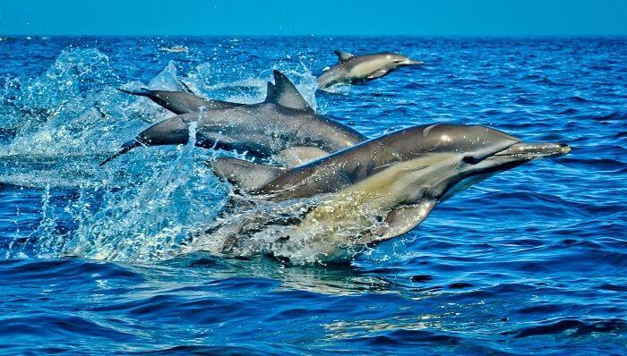 dolphins at wasimi island Kenya