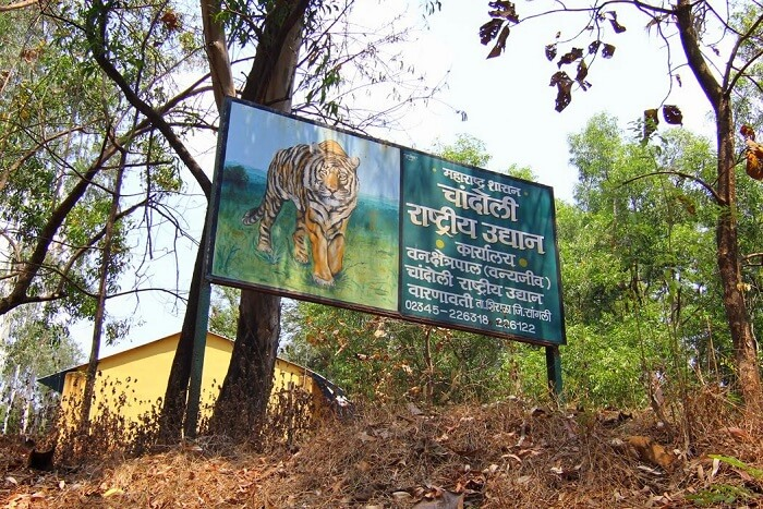 Chandoli National Park Basic Information