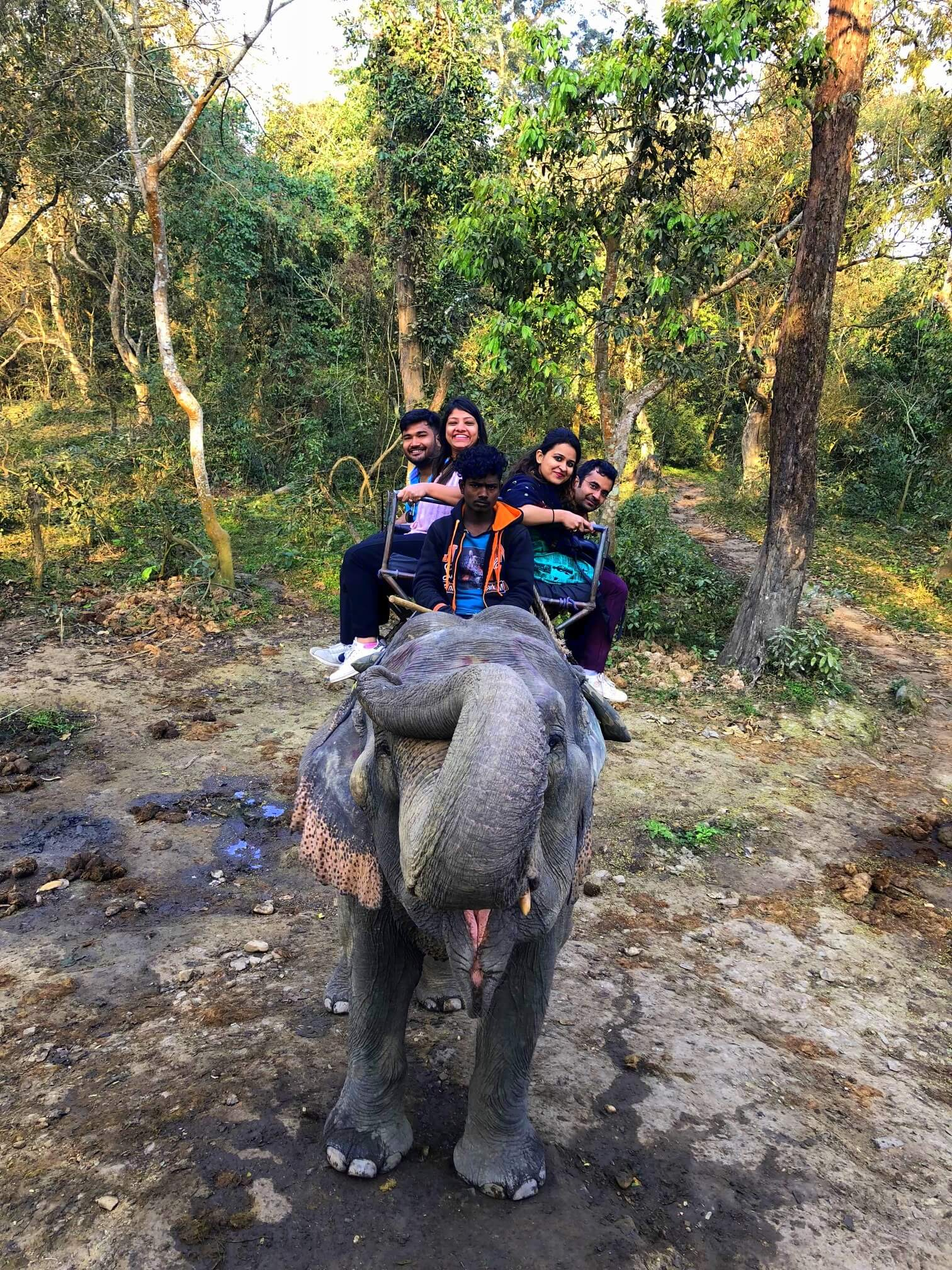 Elephant says good morning - elephant ride kaziranga