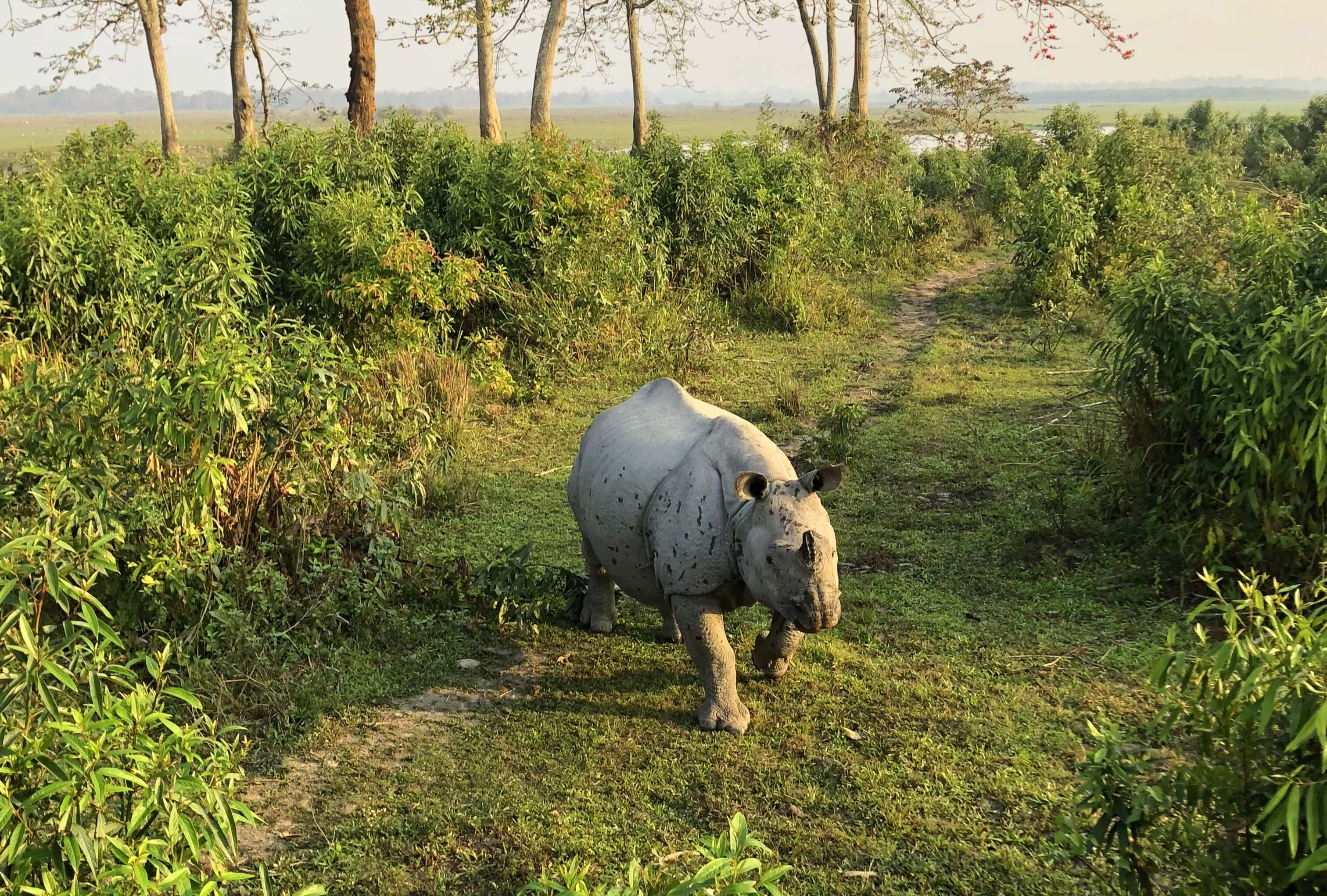 Kaziranga's national animal