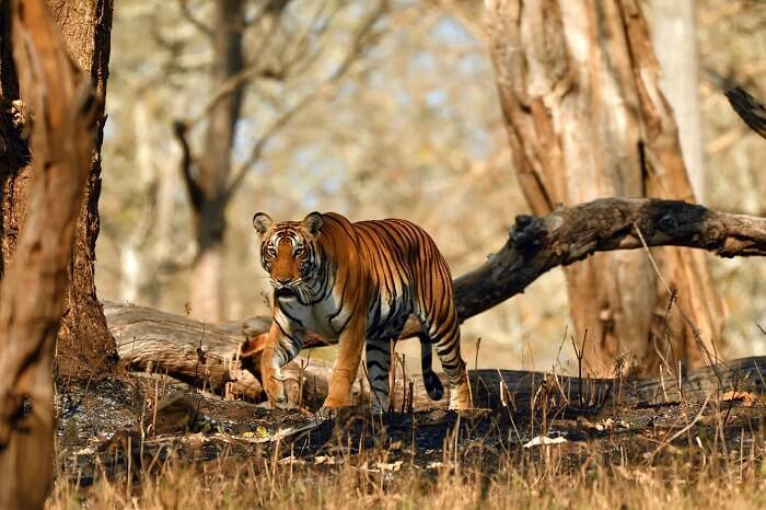 Nagarhole Wildlife Sanctuary