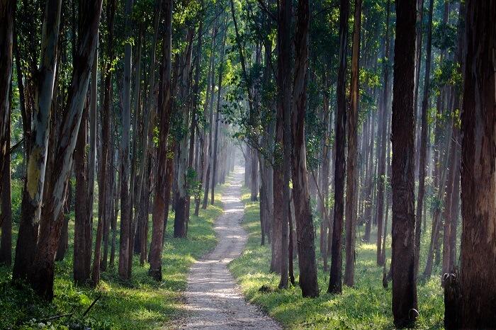 visit Wayanad in summer in kerala