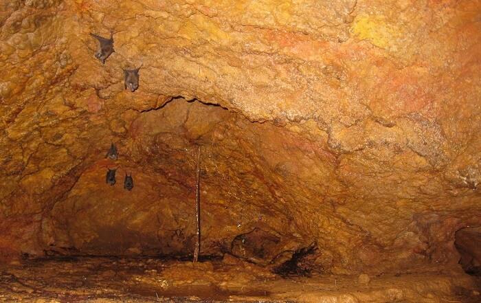 Nityanand Ashram Caves