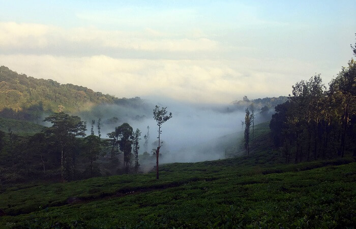 Neelimala Viewpoint in wayanad
