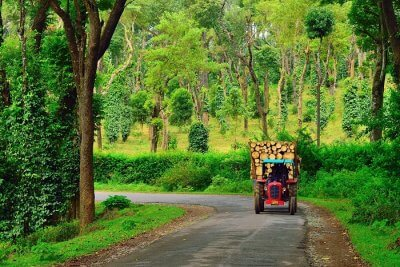 Best things to do in Coorg cover