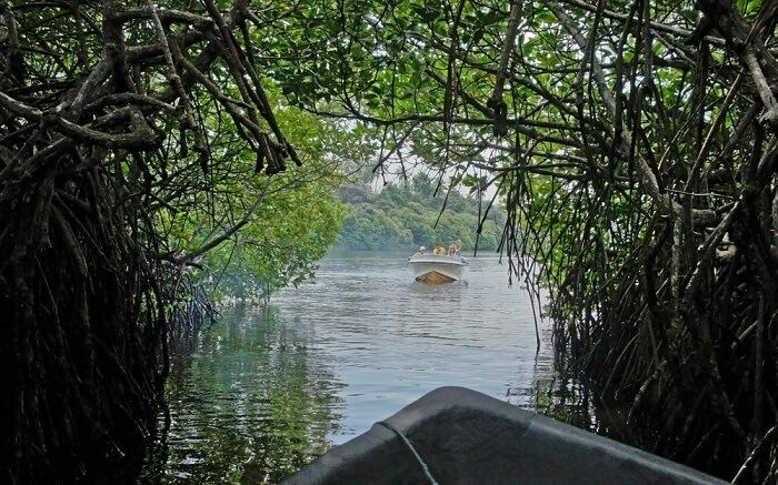 Madu Ganga River Safari shutterstock_1011331507 ss30042018