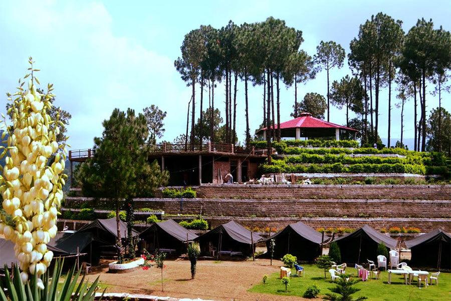 a resort amid trees