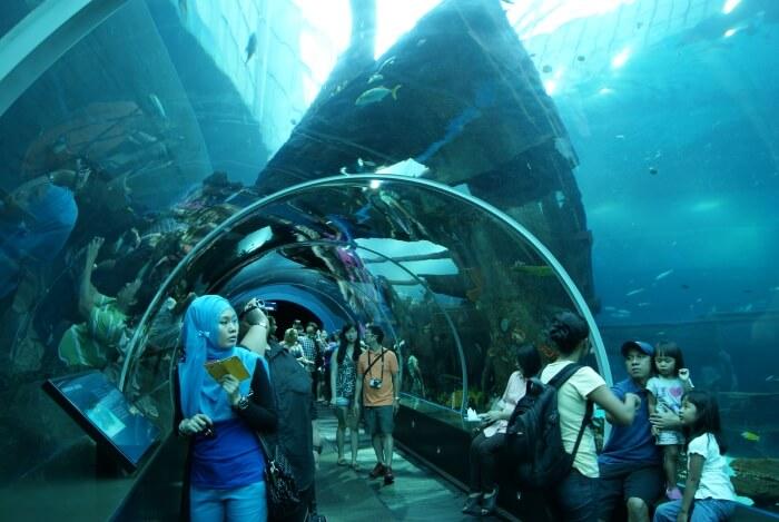 SEA Aquarium in Singapore