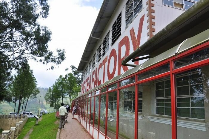 Sip exotic blends of tea at the Tea Museum ooty
