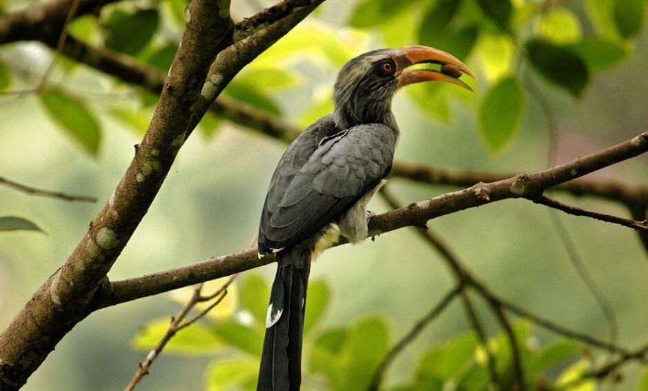Thattekkad Bird Sanctuary kb6592