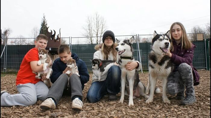Visit A Husky Ranch in austria