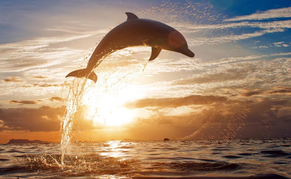 a dolphin in sea