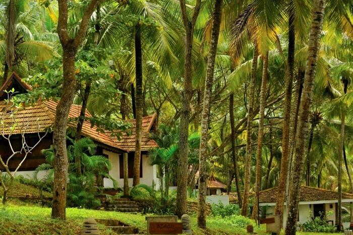 nirmaaya retreat hotel kerala