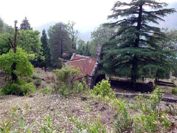 pine cemetry in bhimtal