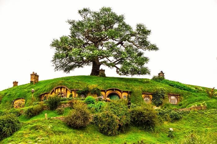 a big tree above hobbiton home