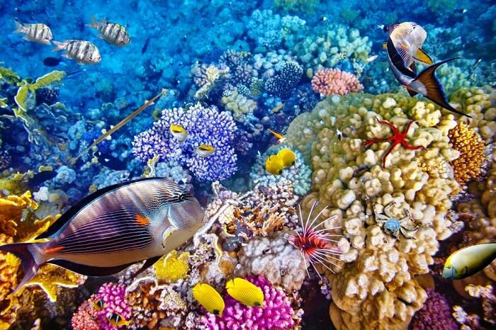 Great Barrier Reef, Hamilton Island, Australia