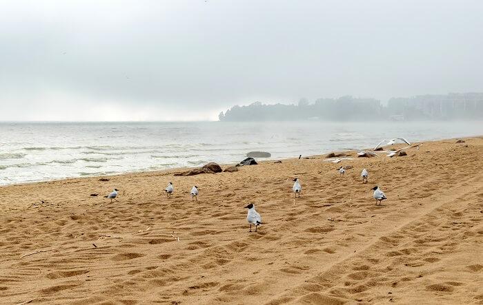 Repino Beach