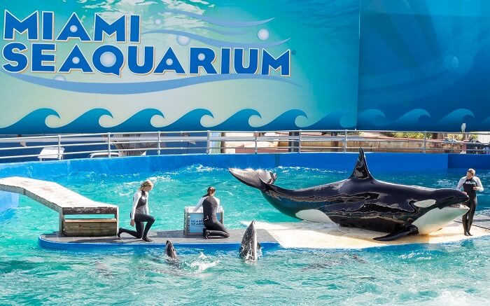 Don't miss out to visit The Miami Seaquarium