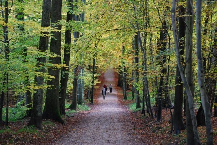 Explore the Woods on Wheels near Brussels