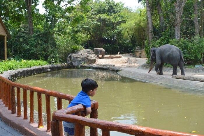 anshu singapore trip: elephants