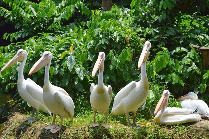 anshu singapore trip: birds in zoo