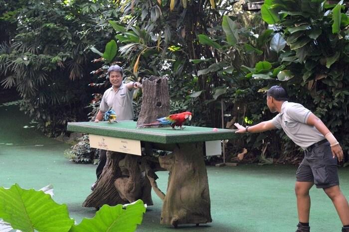 anshu singapore trip: bird show