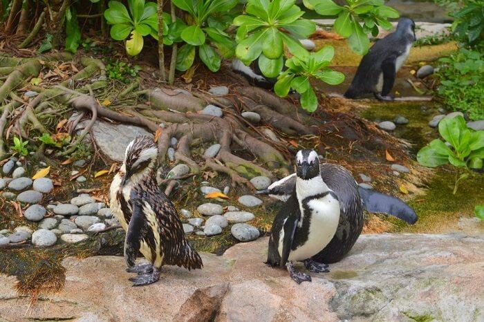 anshu singapore trip: penguins