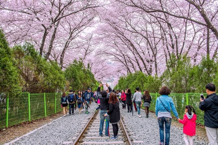 watching the magical blossoms