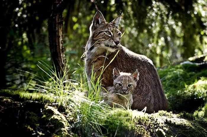 Kolmården Wildlife