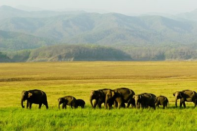 Manas National Park blog image