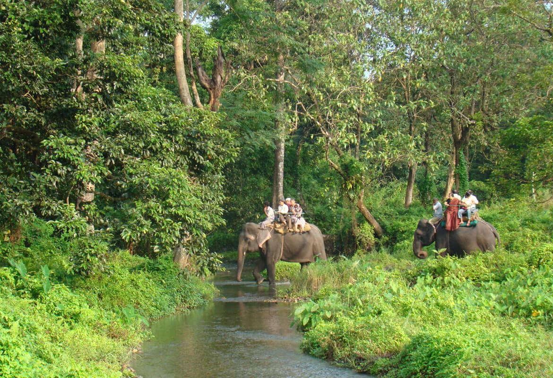 people enjoying elephant safari in Gorumara National Park