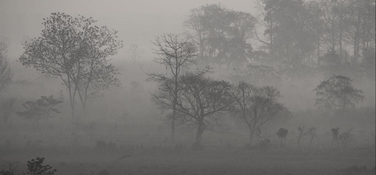 Mist covered Gorumara National Park