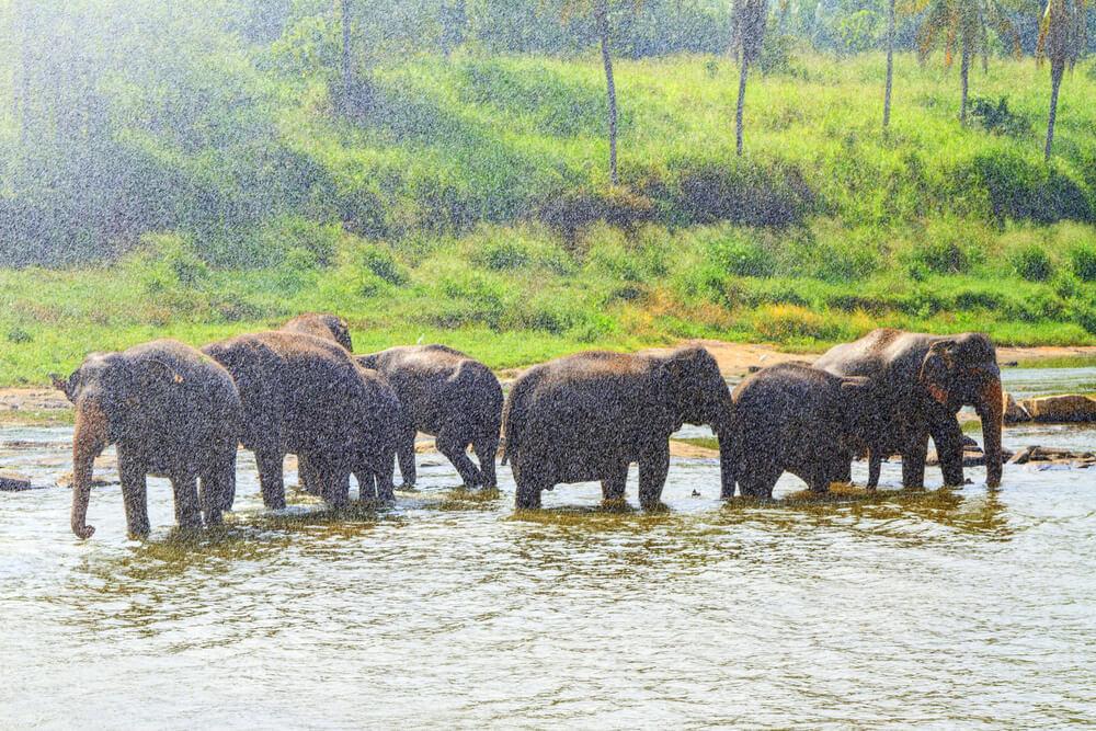 elephants in rain