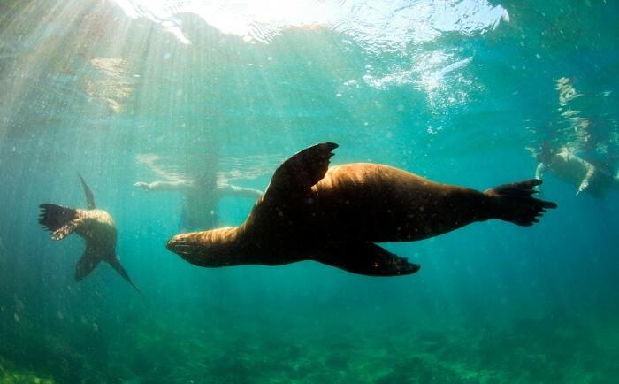 fascinating underwater marine life