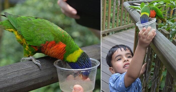 anshu singapore trip: sushant son feeding parrot