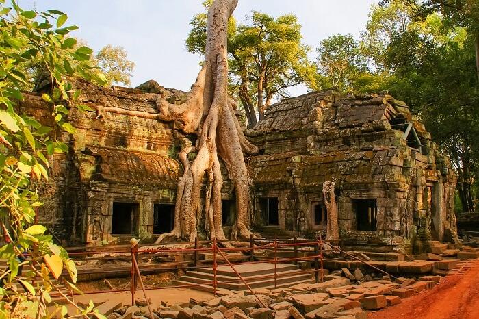 Ta Prohm Angkor Thom Siem reap