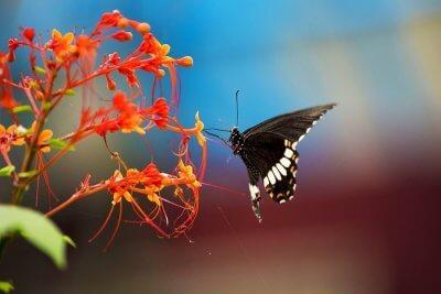 Sammilan Shetty's Butterfly Park
