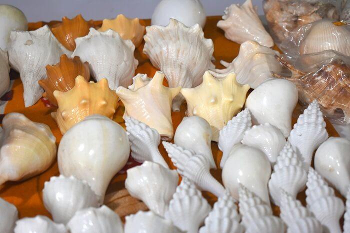 Shells on Radhanagar Beach
